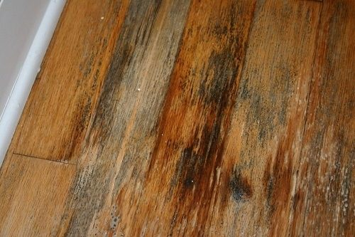 mould in wood